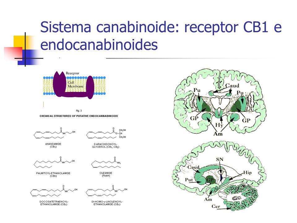 Sistema canabinoide: receptor CB1 e endocanabinoides