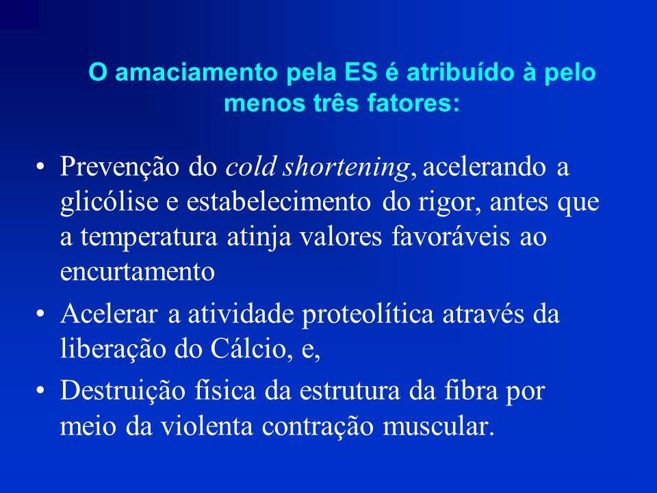 Prevenção do cold shortening, acelerando a glicólise e estabelecimento do rigor, antes que a temperatura atinja valores favoráveis ao encurtamento Ace