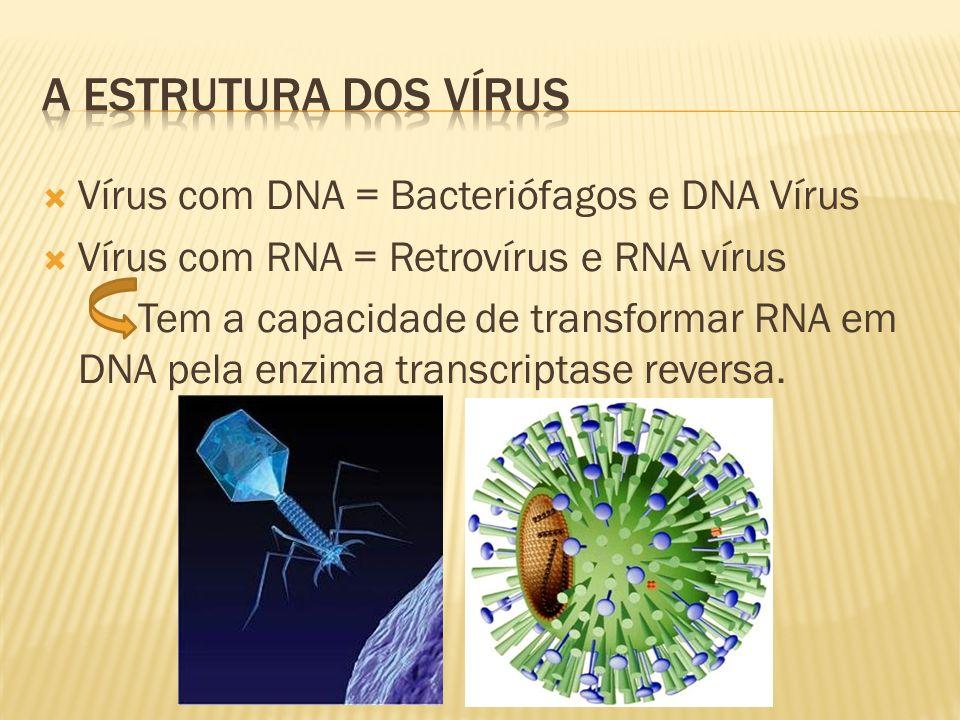 Vírus com DNA = Bacteriófagos e DNA Vírus Vírus com RNA = Retrovírus e RNA vírus Tem a capacidade de transformar RNA em DNA pela enzima transcriptase