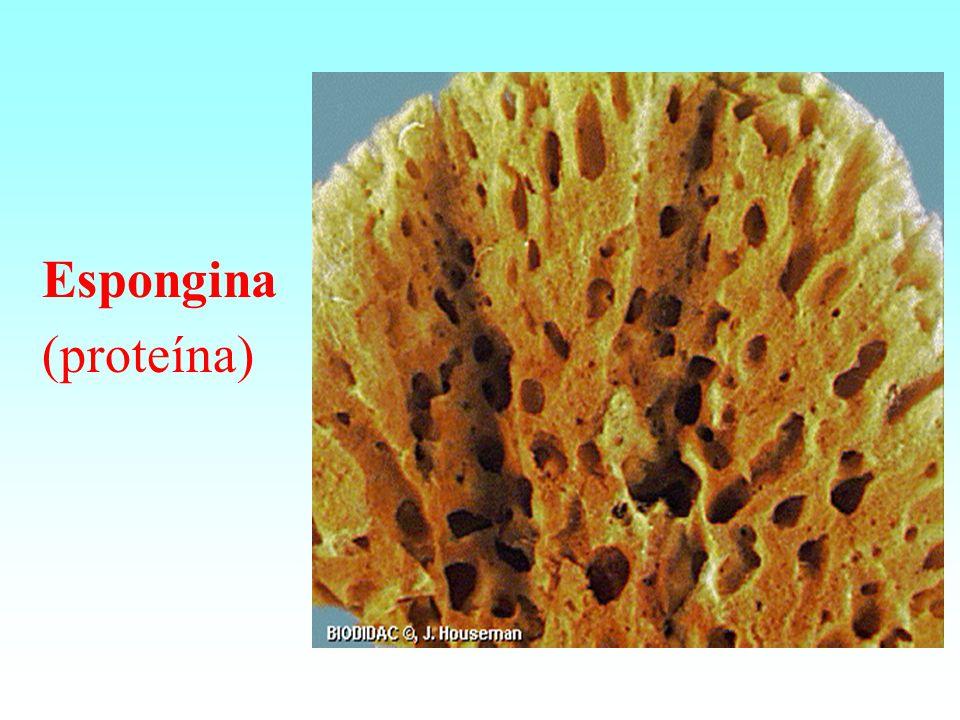 Espongina (proteína)