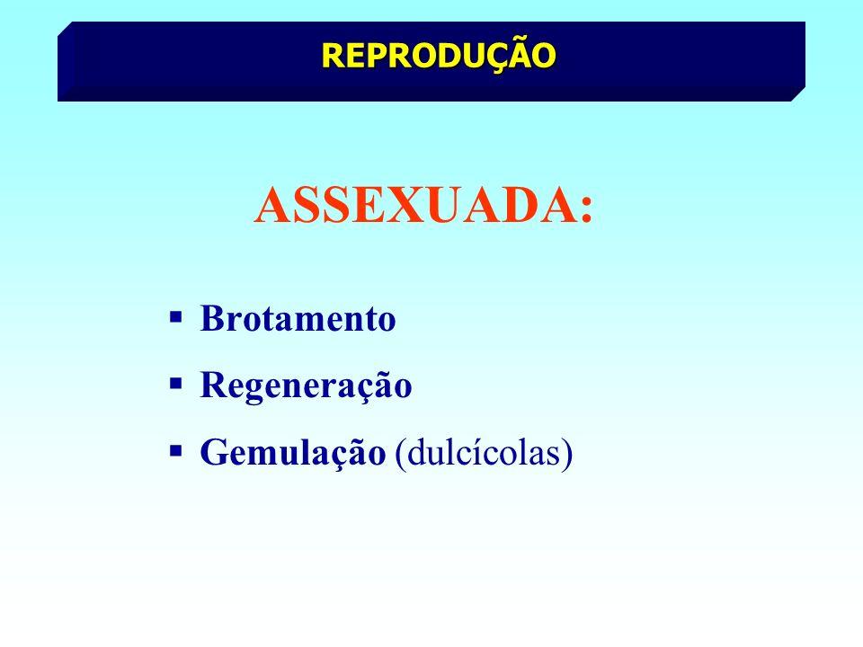 ASSEXUADA: Brotamento Regeneração Gemulação (dulcícolas) REPRODUÇÃO