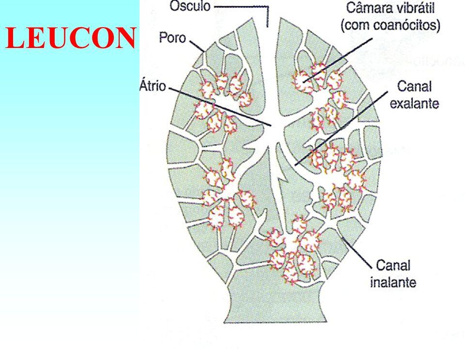 LEUCON