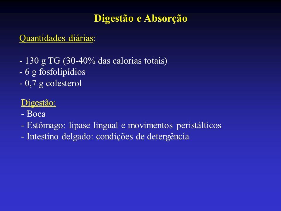 Digestão e Absorção Quantidades diárias: - 130 g TG (30-40% das calorias totais) - 6 g fosfolipídios - 0,7 g colesterol Digestão: - Boca - Estômago: l
