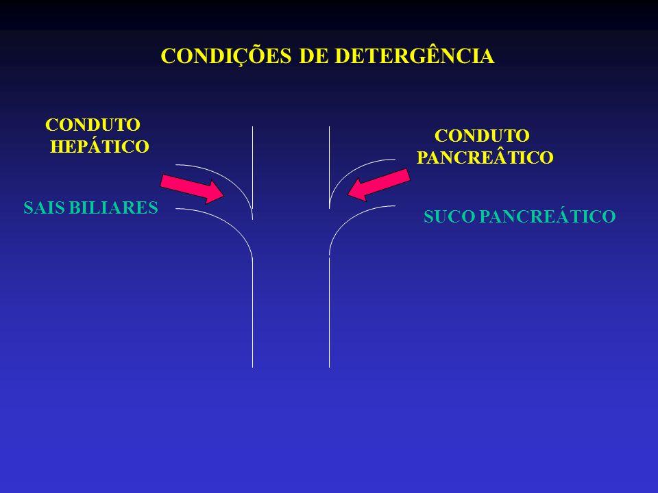 CONDUTO PANCREÂTICO CONDUTO HEPÁTICO CONDIÇÕES DE DETERGÊNCIA SAIS BILIARES SUCO PANCREÁTICO