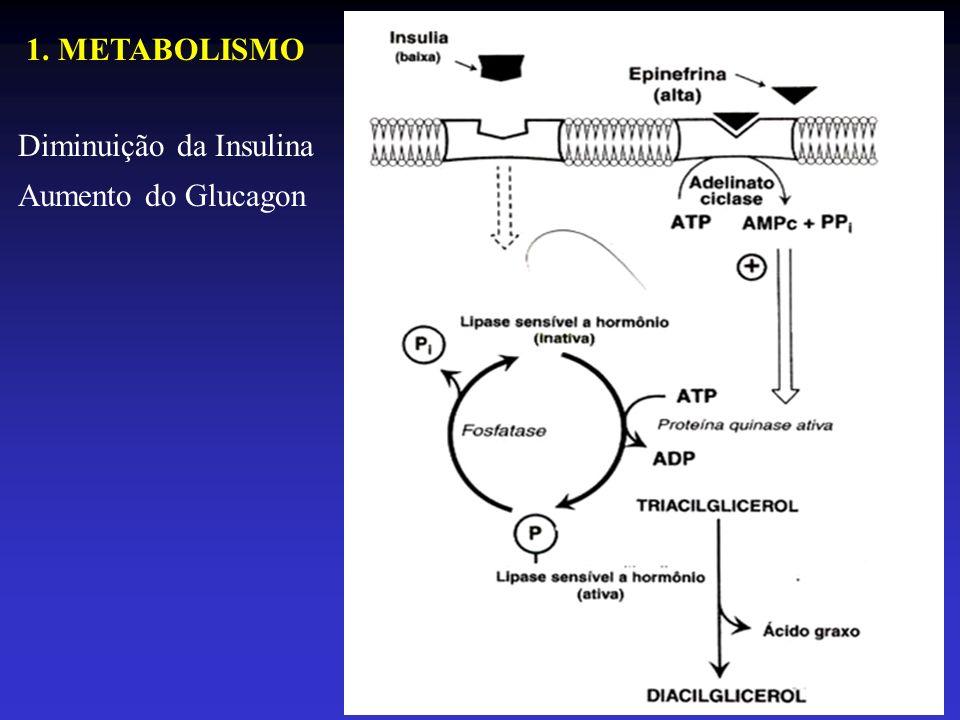 1. METABOLISMO Diminuição da Insulina Aumento do Glucagon