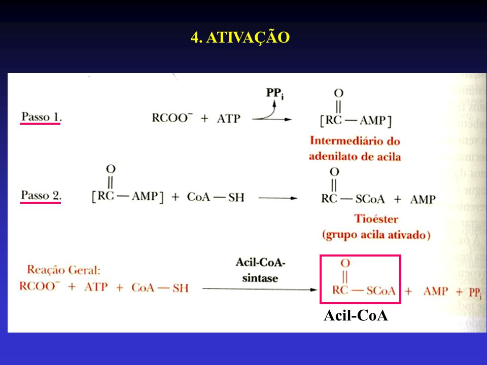 4. ATIVAÇÃO Acil-CoA
