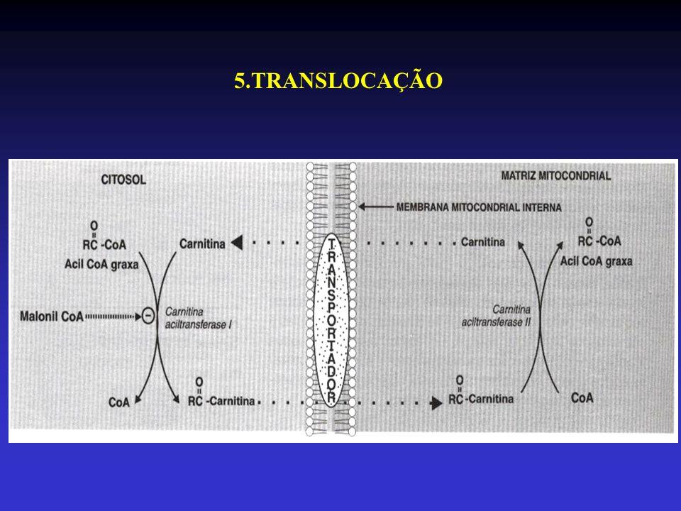 5.TRANSLOCAÇÃO