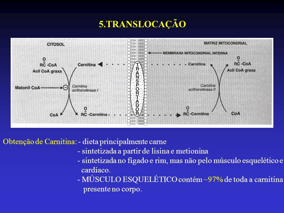 Obtenção de Carnitina: - dieta principalmente carne - sintetizada a partir de lisina e metionina - sintetizada no fígado e rim, mas não pelo músculo e