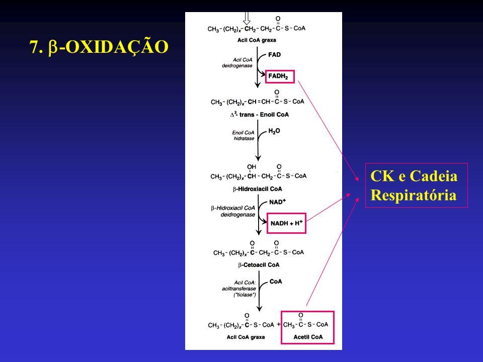 7. -OXIDAÇÃO CK e Cadeia Respiratória