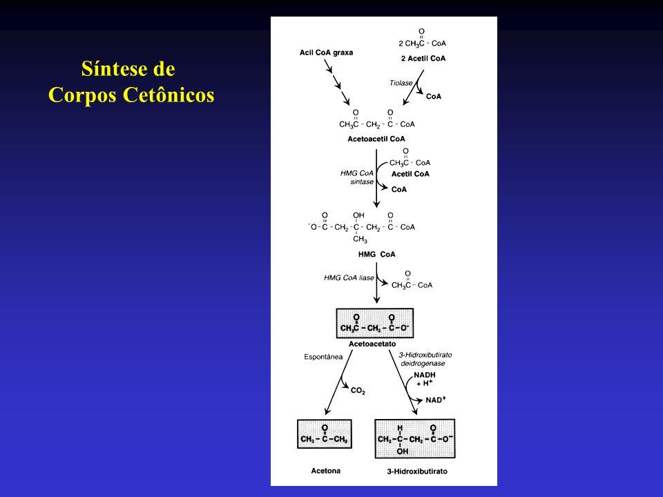 Síntese de Corpos Cetônicos