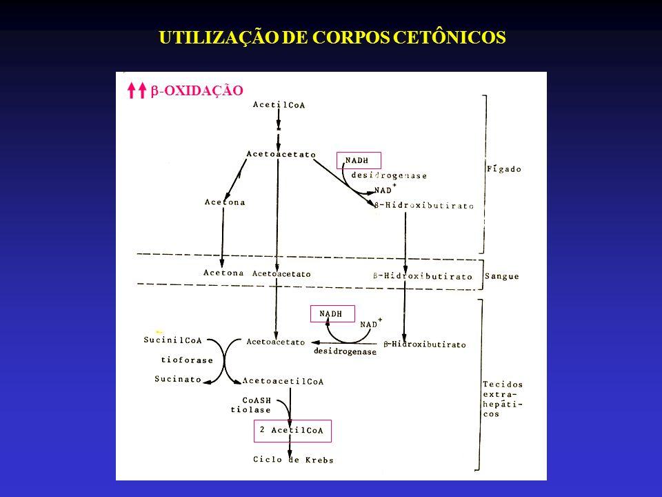 UTILIZAÇÃO DE CORPOS CETÔNICOS -OXIDAÇÃO