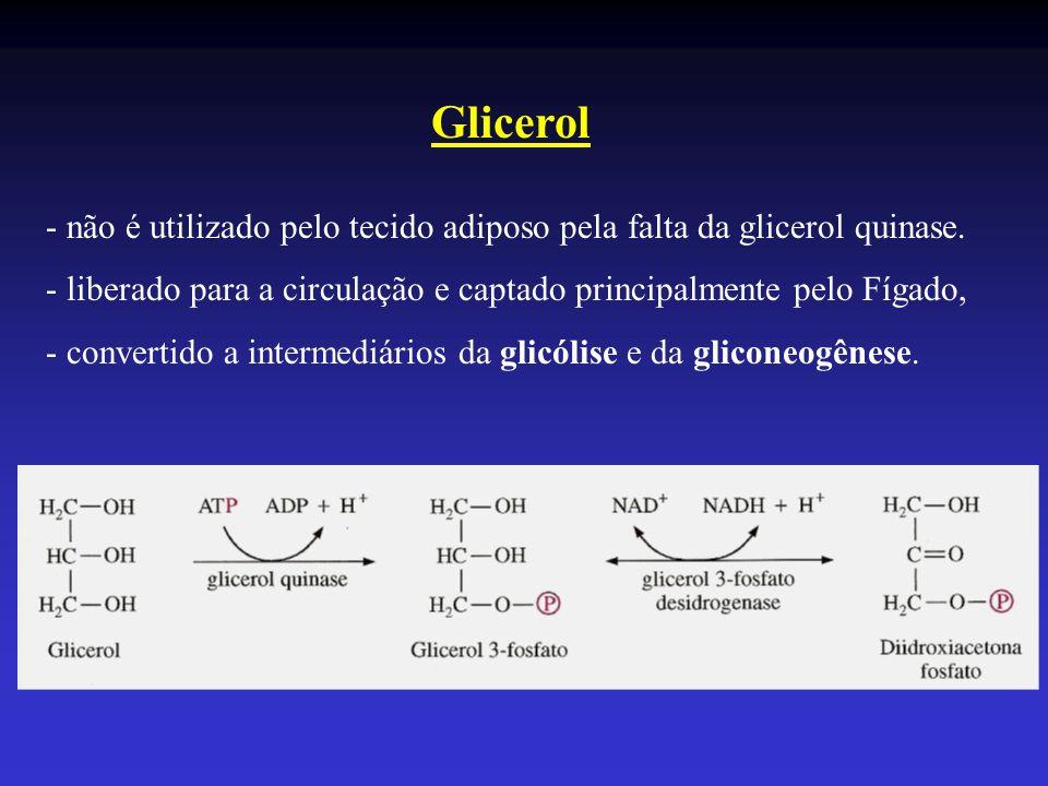 Glicerol - não é utilizado pelo tecido adiposo pela falta da glicerol quinase. - liberado para a circulação e captado principalmente pelo Fígado, - co