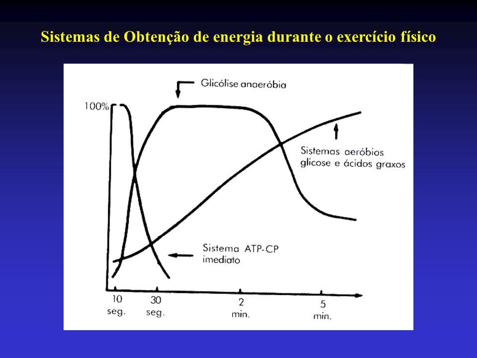 Sistemas de Obtenção de energia durante o exercício físico