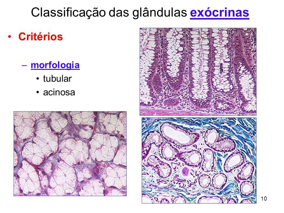 10 Critérios –morfologia tubular acinosa Classificação das glândulas exócrinas