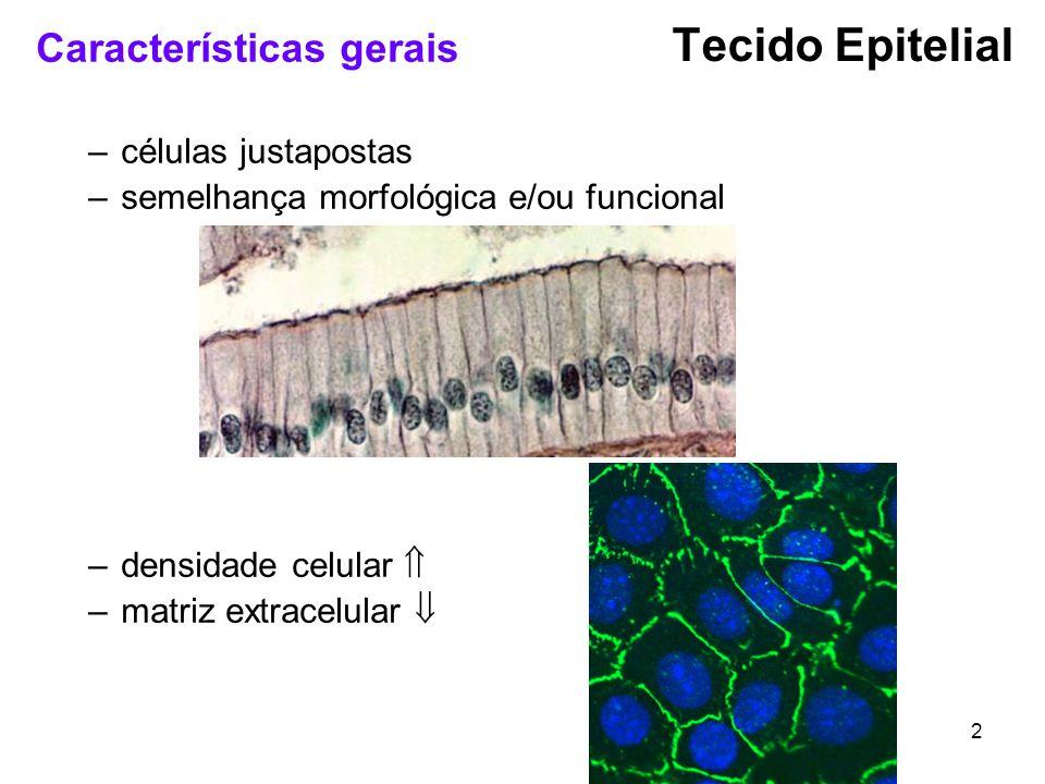 2 Características gerais –células justapostas –semelhança morfológica e/ou funcional –densidade celular –matriz extracelular Tecido Epitelial