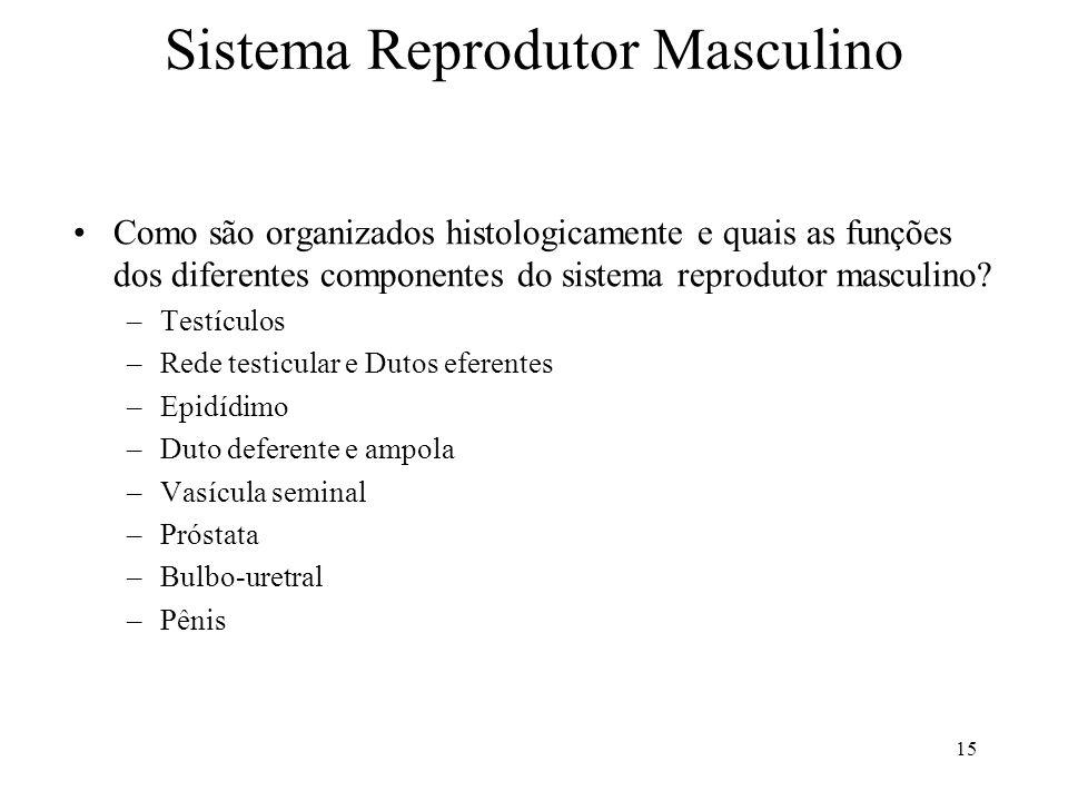 Sistema Reprodutor Masculino Como são organizados histologicamente e quais as funções dos diferentes componentes do sistema reprodutor masculino? –Tes