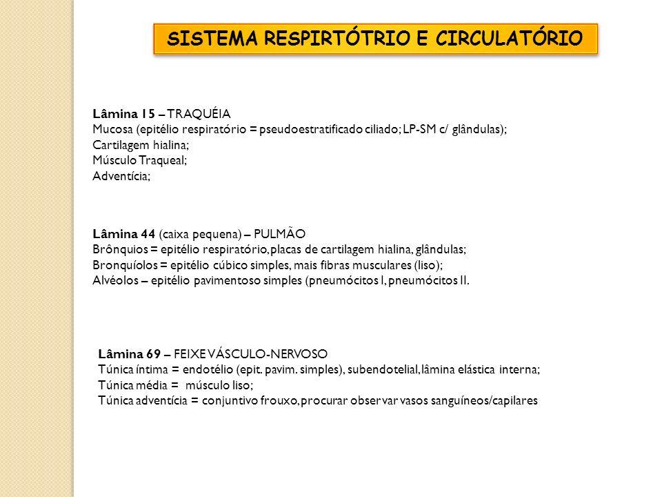 Lâmina 15 – TRAQUÉIA Mucosa (epitélio respiratório = pseudoestratificado ciliado; LP-SM c/ glândulas); Cartilagem hialina; Músculo Traqueal; Adventíci