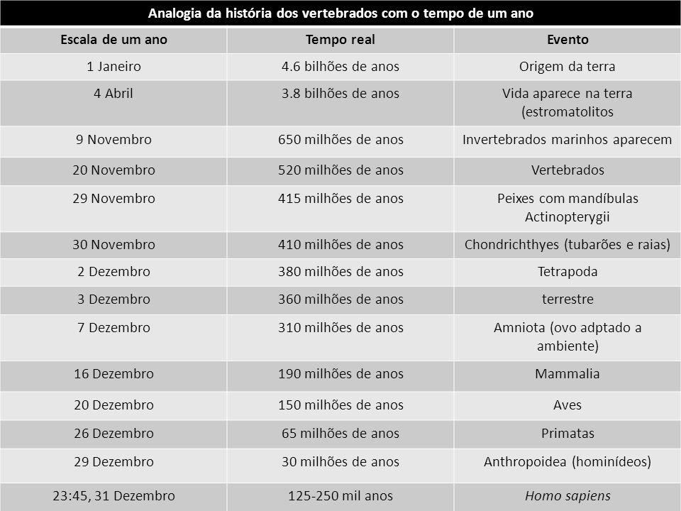 Analogia da história dos vertebrados com o tempo de um ano Escala de um anoTempo realEvento 1 Janeiro4.6 bilhões de anosOrigem da terra 4 Abril3.8 bil