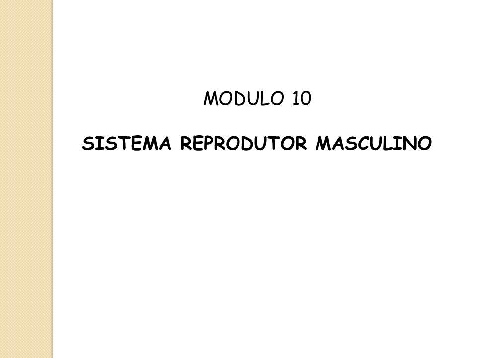 MODULO 10 SISTEMA REPRODUTOR MASCULINO