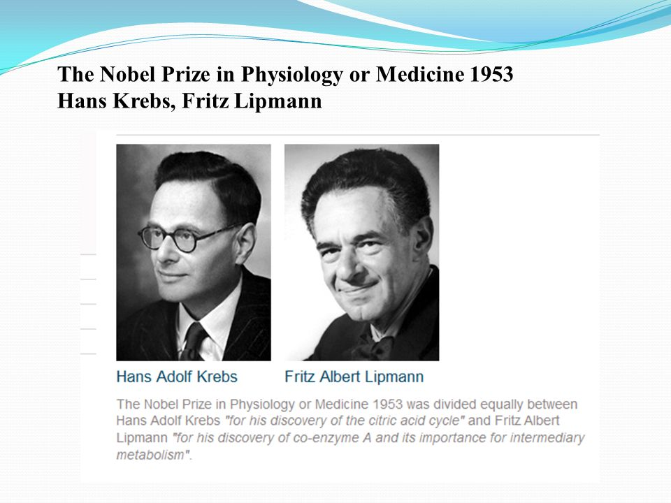 The Nobel Prize in Physiology or Medicine 1953 Hans Krebs, Fritz Lipmann