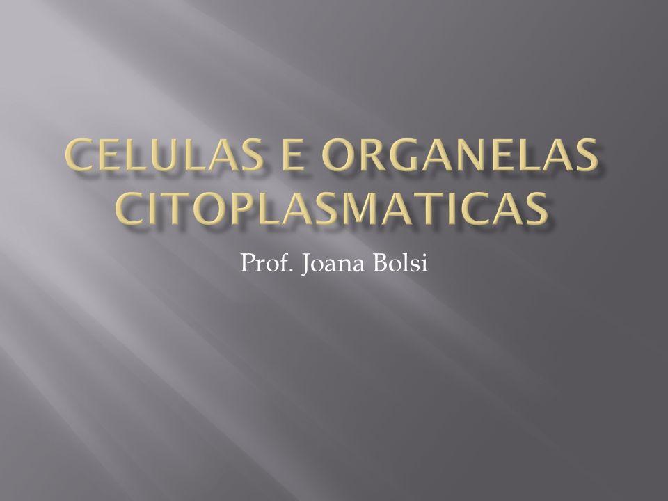 Prof. Joana Bolsi