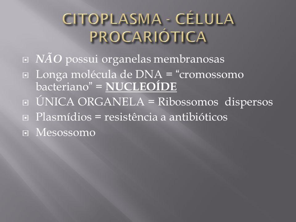 NÃO possui organelas membranosas Longa molécula de DNA = cromossomo bacteriano = N UCLEOÍDE ÚNICA ORGANELA = Ribossomos dispersos Plasmídios = resistência a antibióticos Mesossomo