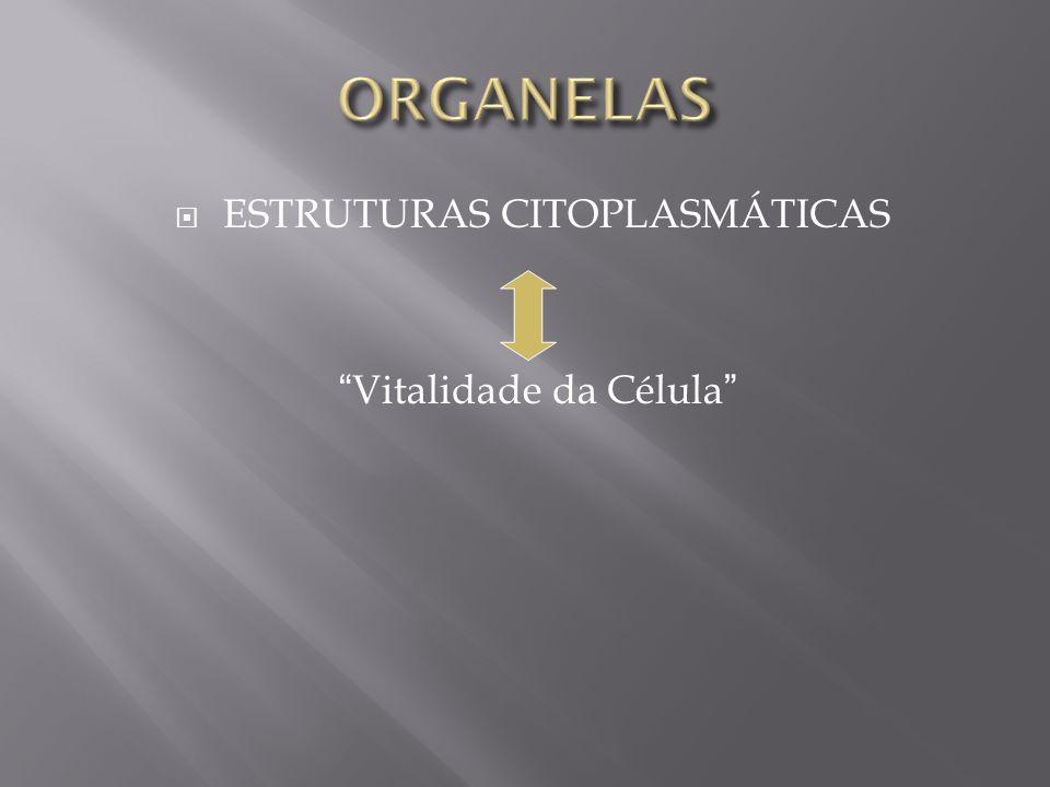 ESTRUTURAS CITOPLASMÁTICAS Vitalidade da Célula