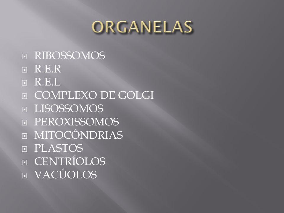 RIBOSSOMOS R.E.R R.E.L COMPLEXO DE GOLGI LISOSSOMOS PEROXISSOMOS MITOCÔNDRIAS PLASTOS CENTRÍOLOS VACÚOLOS