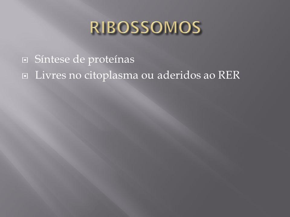 Síntese de proteínas Livres no citoplasma ou aderidos ao RER