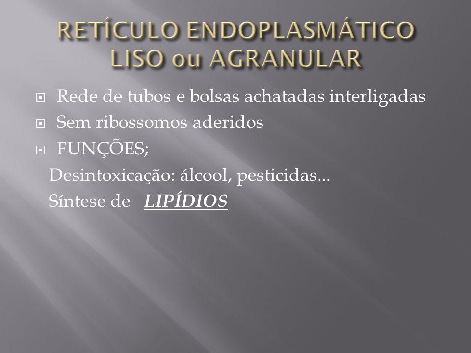 Rede de tubos e bolsas achatadas interligadas Sem ribossomos aderidos FUNÇÕES; Desintoxicação: álcool, pesticidas...