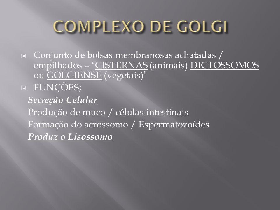 Conjunto de bolsas membranosas achatadas / empilhados – CISTERNAS (animais) DICTOSSOMOS ou GOLGIENSE (vegetais) FUNÇÕES; S ecreção Celular Produção de muco / células intestinais Formação do acrossomo / Espermatozoídes P roduz o Lisossomo