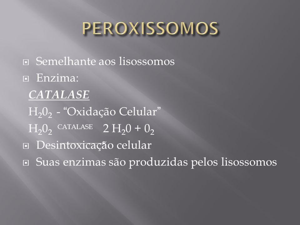Semelhante aos lisossomos Enzima: CATALASE H 2 0 2 - Oxidação Celular H 2 0 2 CATALASE 2 H 2 0 + 0 2 Desintoxicação celular Suas enzimas são produzidas pelos lisossomos