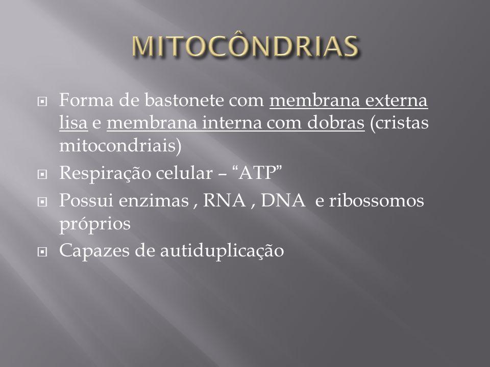 Forma de bastonete com membrana externa lisa e membrana interna com dobras (cristas mitocondriais) Respiração celular – ATP Possui enzimas, RNA, DNA e ribossomos próprios Capazes de autiduplicação
