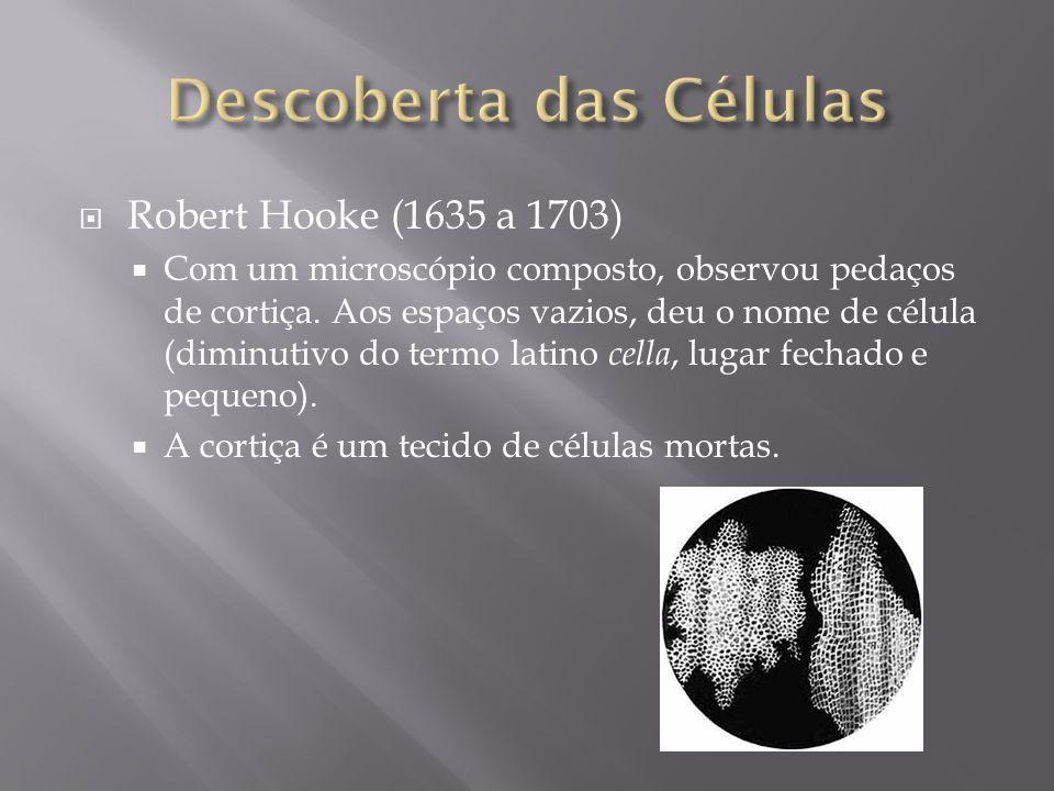 Robert Hooke (1635 a 1703) Com um microscópio composto, observou pedaços de cortiça.