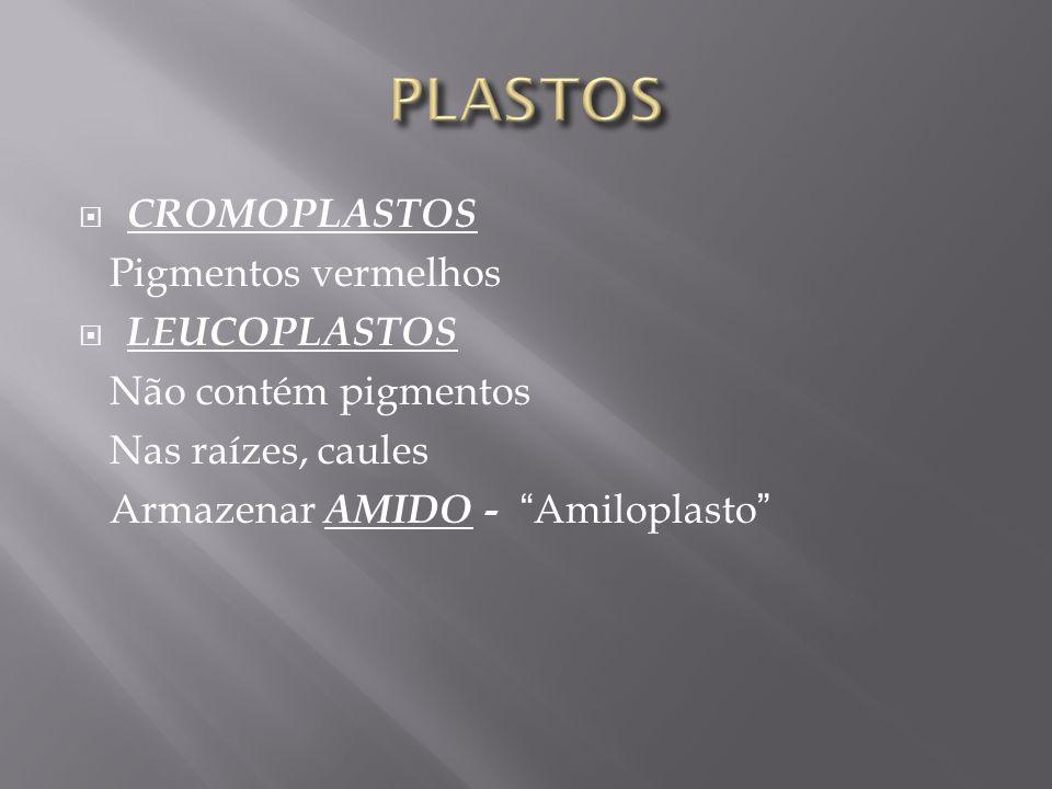 CROMOPLASTOS Pigmentos vermelhos LEUCOPLASTOS Não contém pigmentos Nas raízes, caules Armazenar AMIDO - Amiloplasto