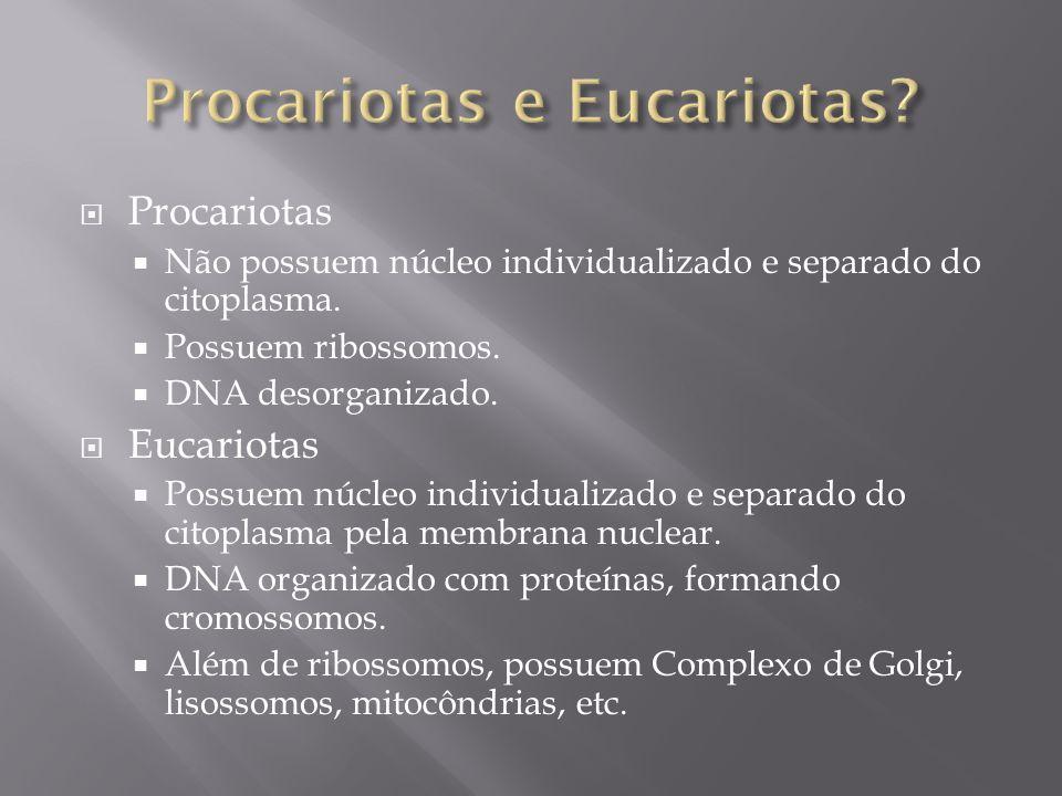 Procariotas Não possuem núcleo individualizado e separado do citoplasma.