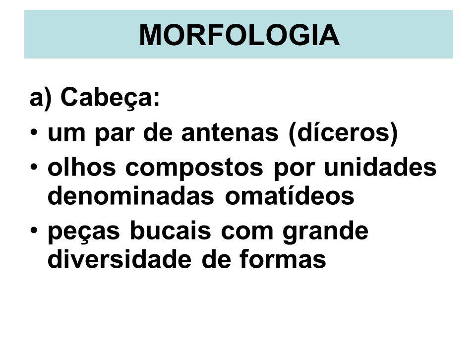 MORFOLOGIA a) Cabeça: um par de antenas (díceros) olhos compostos por unidades denominadas omatídeos peças bucais com grande diversidade de formas
