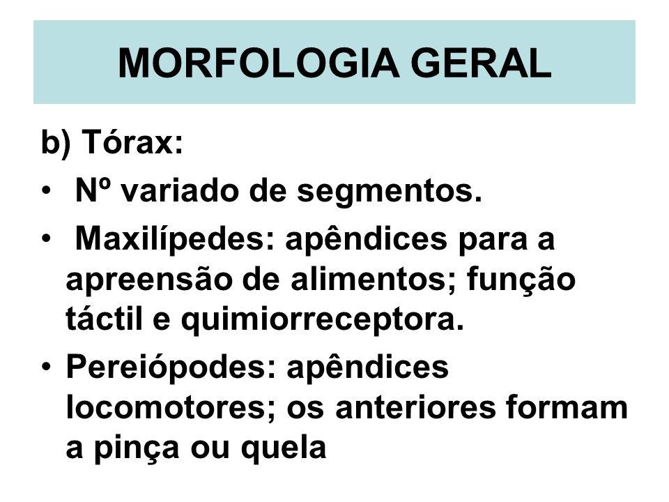 MORFOLOGIA GERAL b) Tórax: Nº variado de segmentos. Maxilípedes: apêndices para a apreensão de alimentos; função táctil e quimiorreceptora. Pereiópode