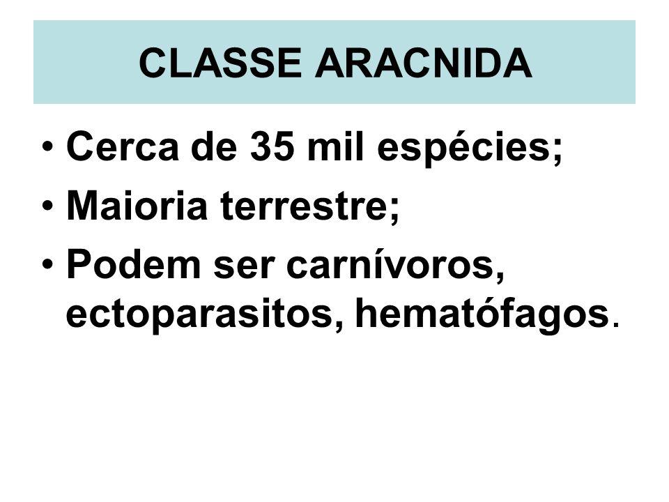 CLASSE ARACNIDA Cerca de 35 mil espécies; Maioria terrestre; Podem ser carnívoros, ectoparasitos, hematófagos.