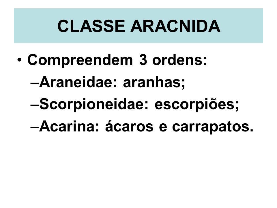 CLASSE ARACNIDA Compreendem 3 ordens: –Araneidae: aranhas; –Scorpioneidae: escorpiões; –Acarina: ácaros e carrapatos.