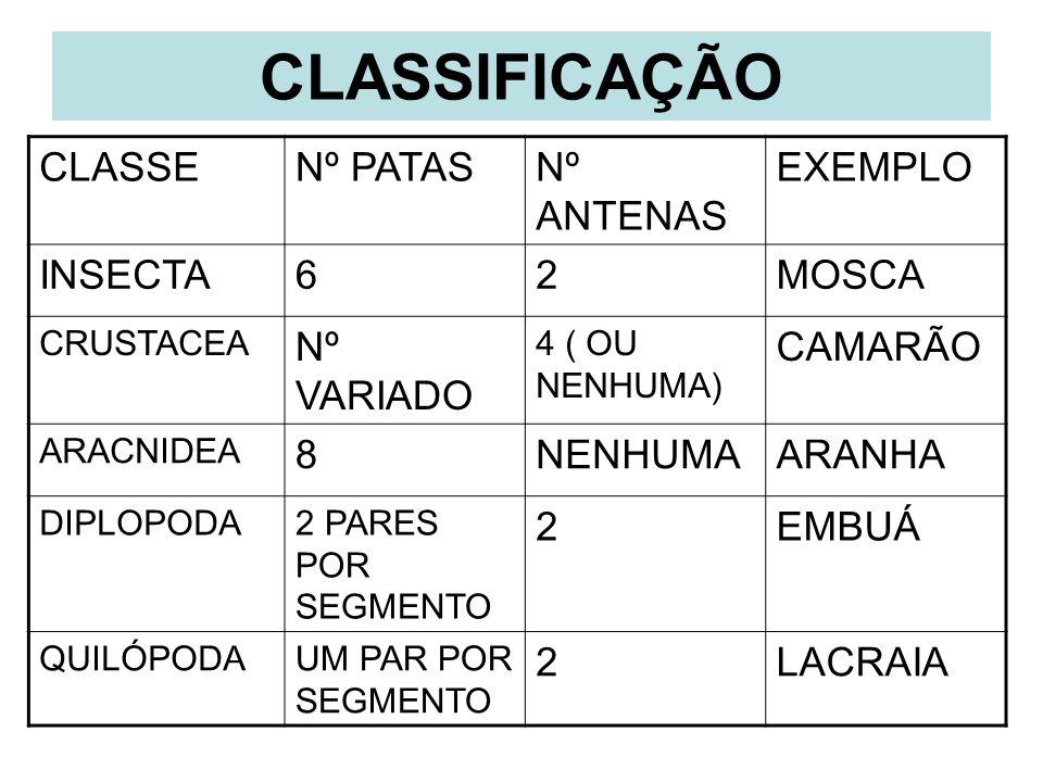 CLASSIFICAÇÃO CLASSENº PATASNº ANTENAS EXEMPLO INSECTA62MOSCA CRUSTACEA Nº VARIADO 4 ( OU NENHUMA) CAMARÃO ARACNIDEA 8NENHUMAARANHA DIPLOPODA2 PARES P