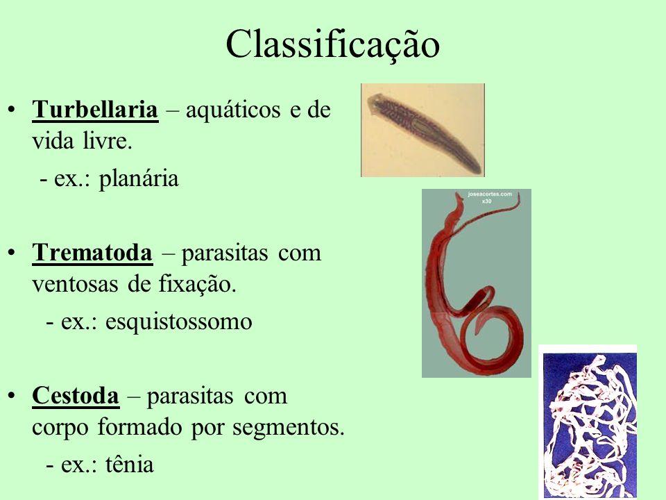 Classificação Turbellaria – aquáticos e de vida livre. - ex.: planária Trematoda – parasitas com ventosas de fixação. - ex.: esquistossomo Cestoda – p