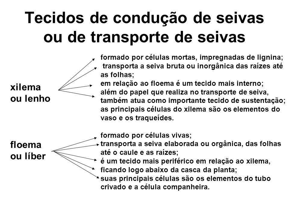 Tecidos de condução de seivas ou de transporte de seivas xilema ou lenho floema ou líber formado por células mortas, impregnadas de lignina; transport