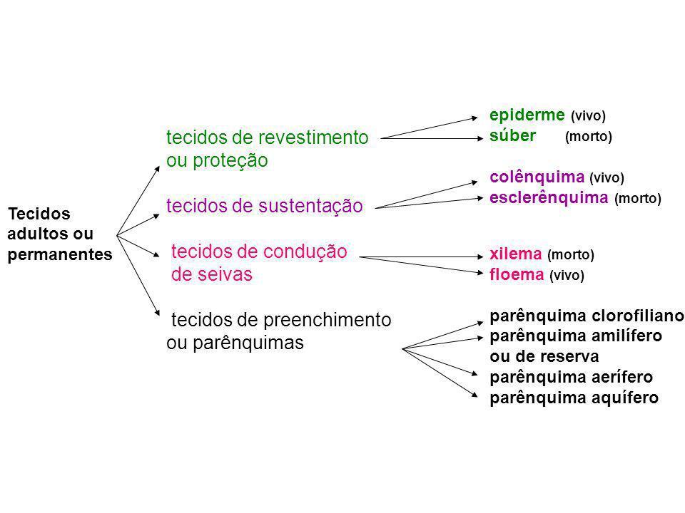 Tecidos de condução de seivas ou de transporte de seivas xilema ou lenho floema ou líber formado por células mortas, impregnadas de lignina; transporta a seiva bruta ou inorgânica das raízes até as folhas; em relação ao floema é um tecido mais interno; além do papel que realiza no transporte de seiva, também atua como importante tecido de sustentação; as principais células do xilema são os elementos do vaso e os traqueídes.