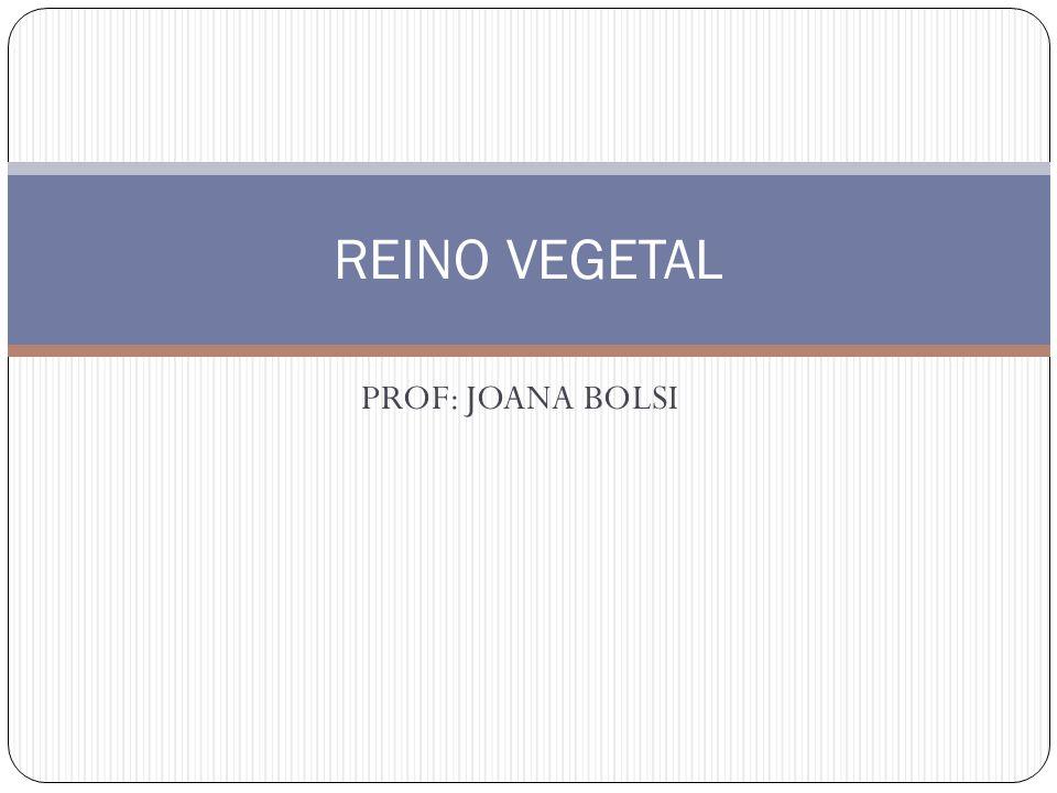PROF: JOANA BOLSI REINO VEGETAL
