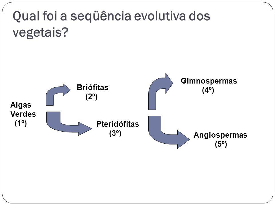 Qual foi a seqüência evolutiva dos vegetais? Algas Verdes (1º) Briófitas (2º) Pteridófitas (3º) Gimnospermas (4º) Angiospermas (5º)