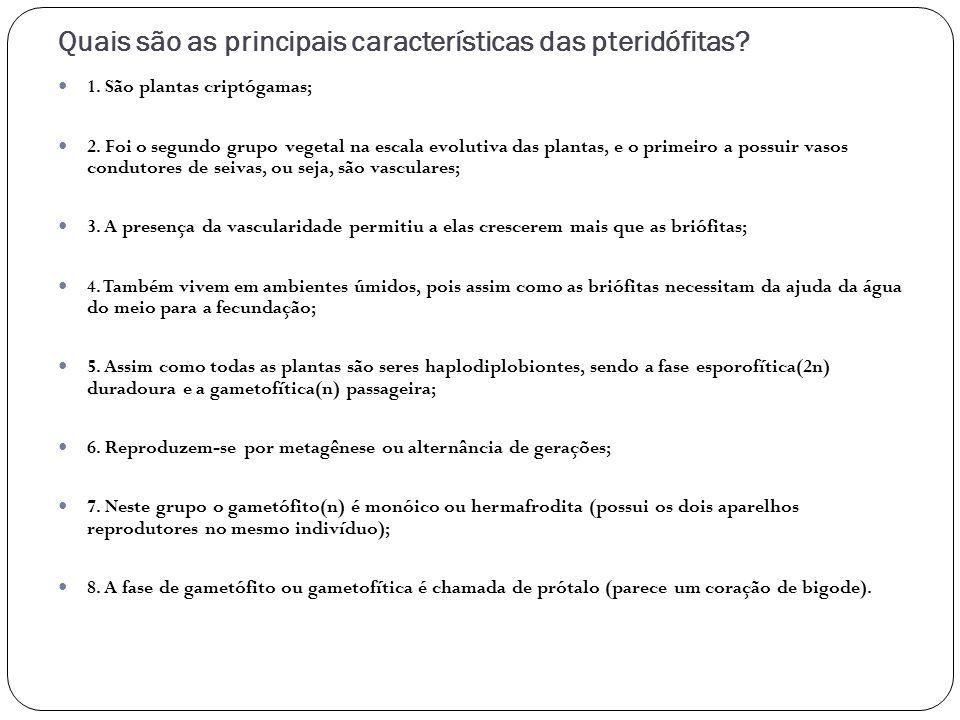 Quais são as principais características das pteridófitas? 1. São plantas criptógamas; 2. Foi o segundo grupo vegetal na escala evolutiva das plantas,