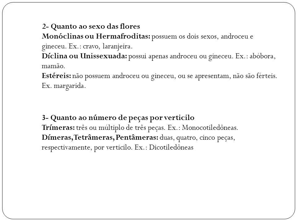 2- Quanto ao sexo das flores Monóclinas ou Hermafroditas: possuem os dois sexos, androceu e gineceu. Ex.: cravo, laranjeira. Díclina ou Unissexuada: p