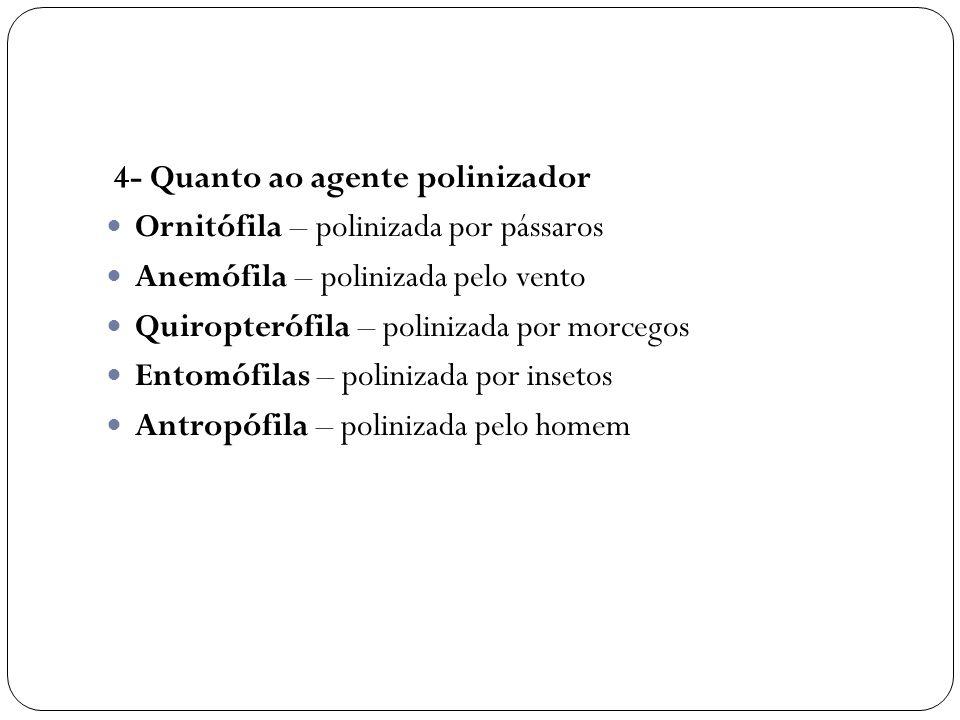 4- Quanto ao agente polinizador Ornitófila – polinizada por pássaros Anemófila – polinizada pelo vento Quiropterófila – polinizada por morcegos Entomó
