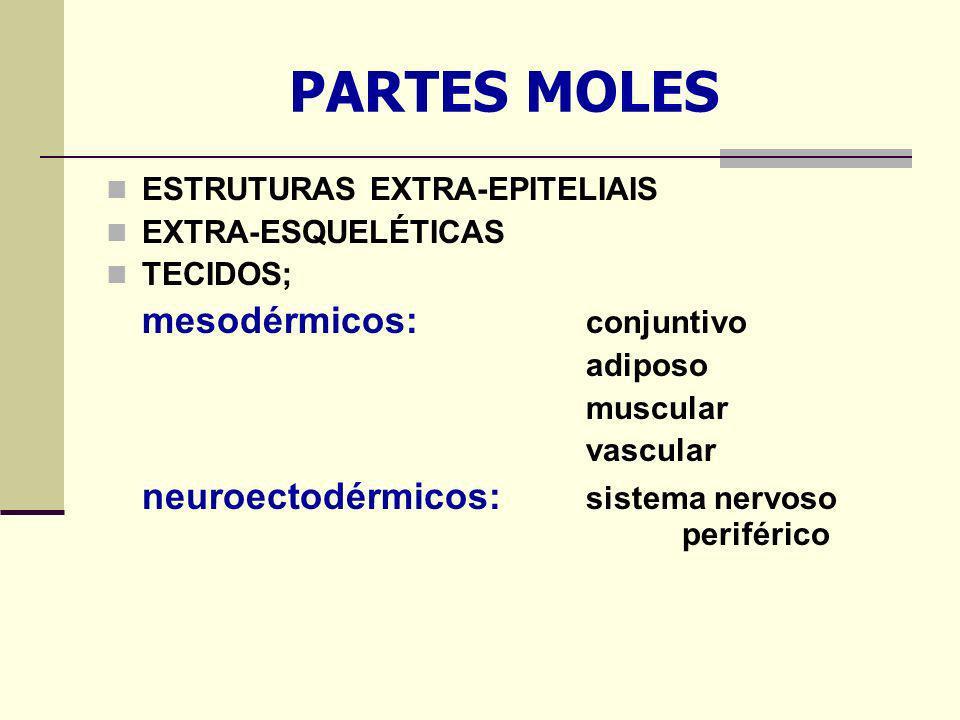 PARTES MOLES ESTRUTURAS EXTRA-EPITELIAIS EXTRA-ESQUELÉTICAS TECIDOS; mesodérmicos: conjuntivo adiposo muscular vascular neuroectodérmicos: sistema nervoso periférico